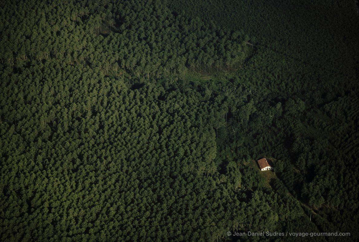 Maison dans la forêt des Landes de Gascogne / House in the forest of the Landes de Gascogne
