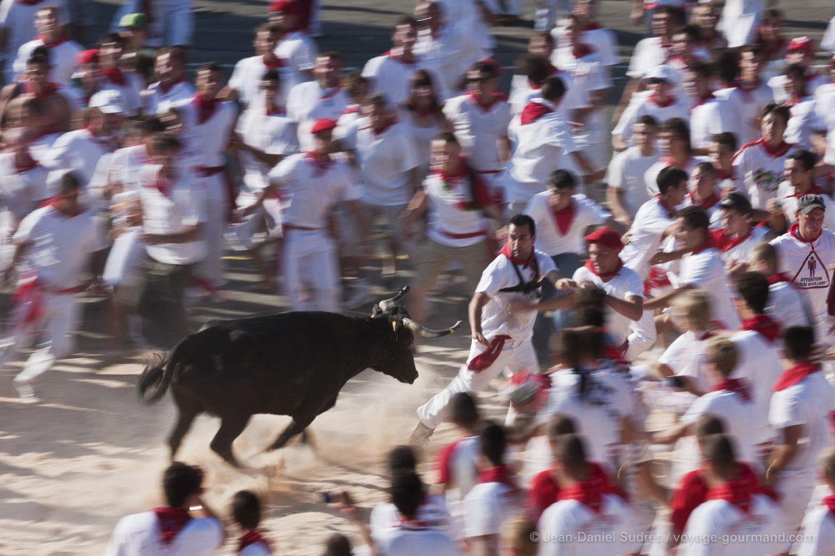 Courses de vaches lors de Fêtes de Bayonne