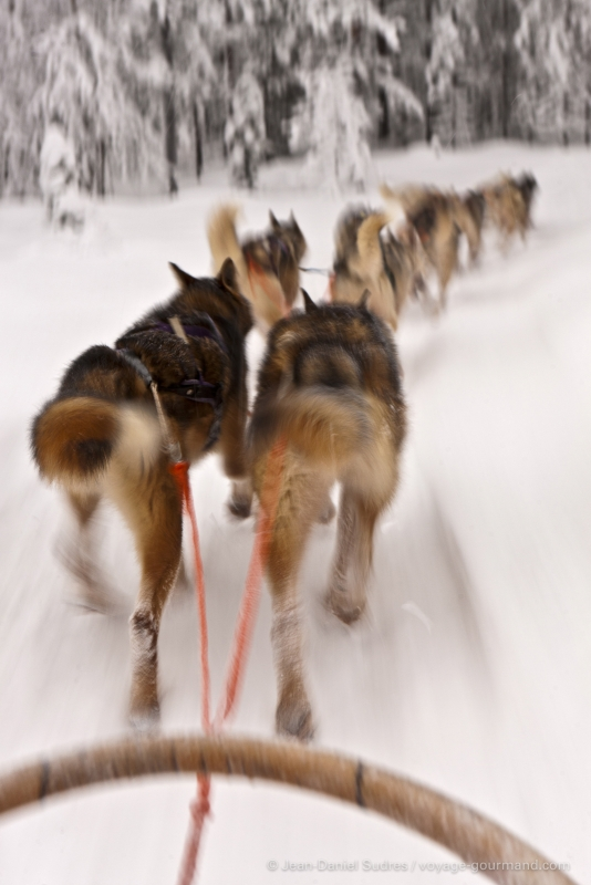 Raid en traineau à chiens, Laponie
