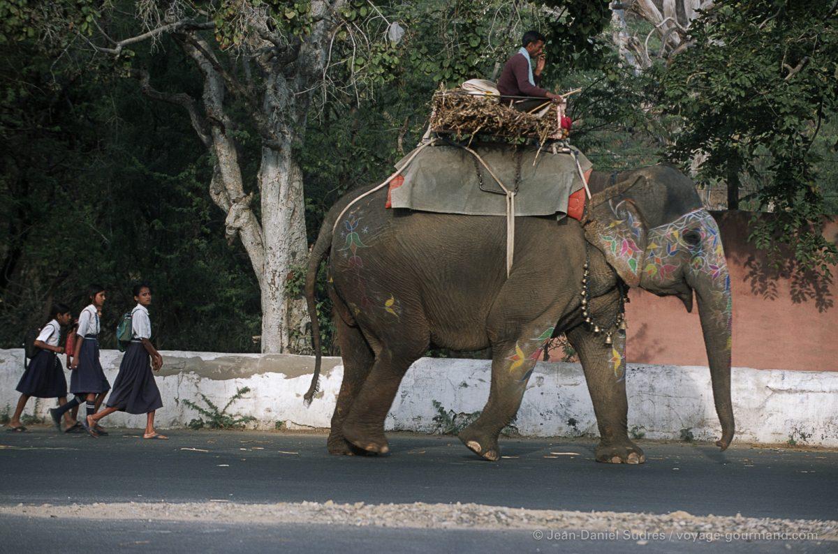 Eléphant et écolières dans les rues des Jaipur