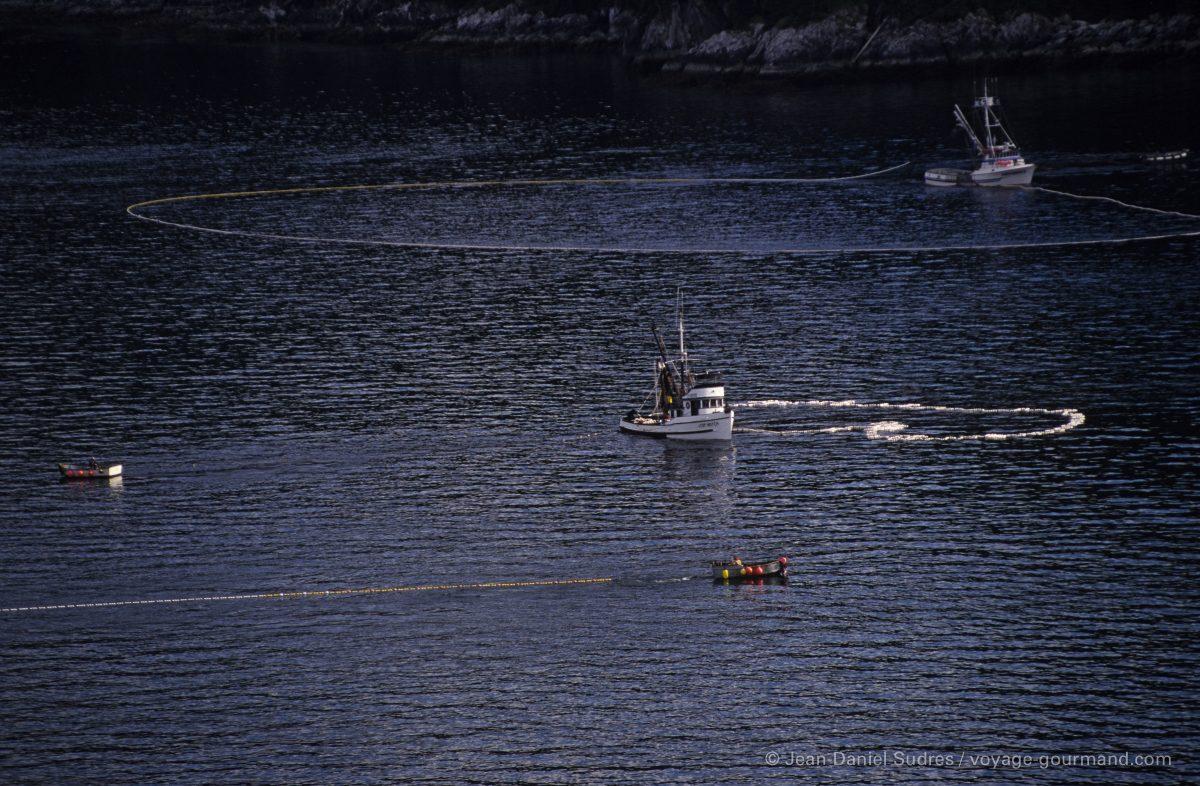 Pêche au saumon, Ketchikan, Alaska / Salmon fishing, Ketchikan, Alaska
