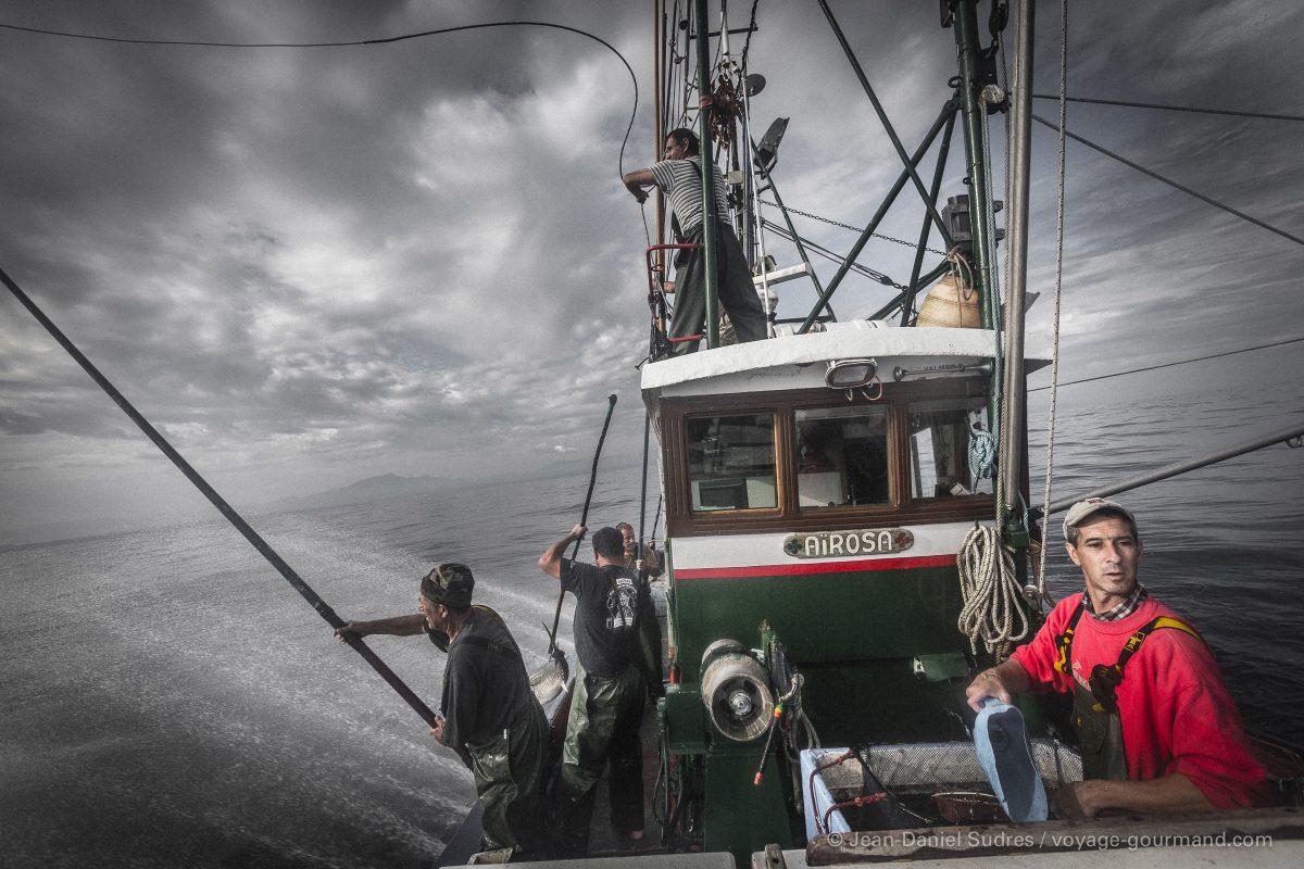 Pêche au thon à la canne, Saint-Jean-de-Luz